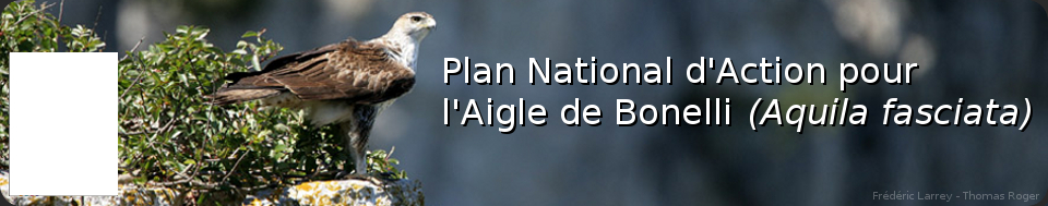 www.aigledebonelli.org